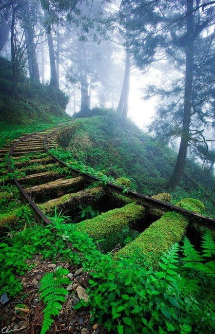 Moss Covered Railroad Tracks, Taiwan