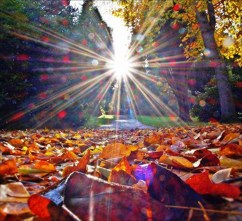 Autumn Leaves, Scotland