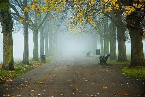 Foggy Greewich Park, London