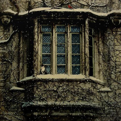 Windows and Vines, Paris, France