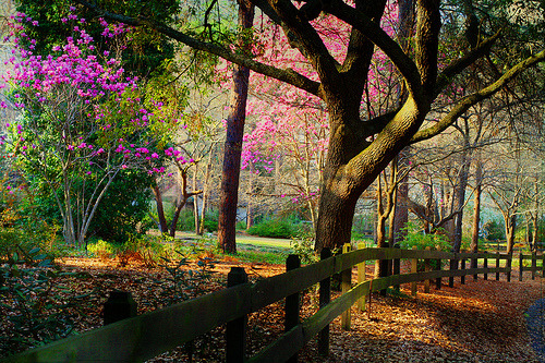 Spring, Raleigh, North Carolina