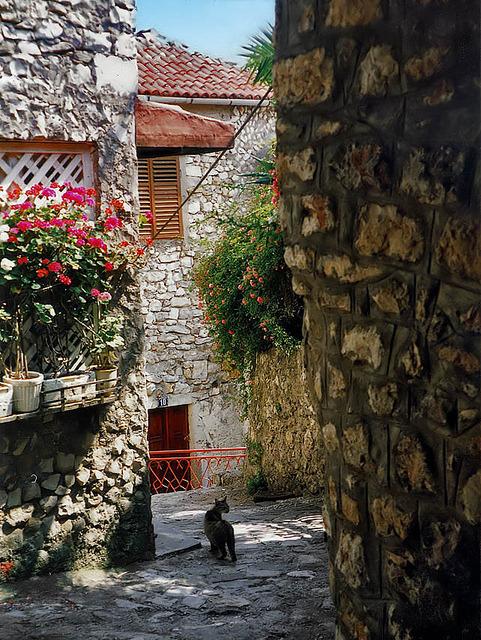 Cat on the streets of Ulcinj, Montenegro