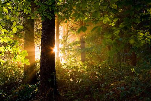 Sunrise Forest, Yorkshire Dales, England