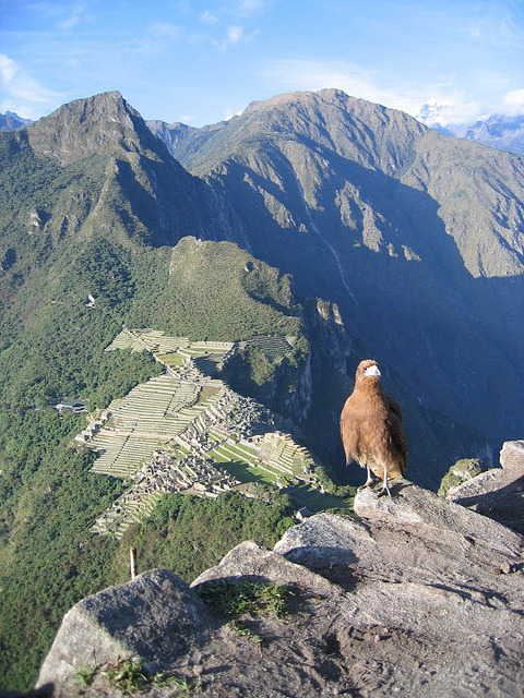 Looking at Machu Picchu from above, Peru