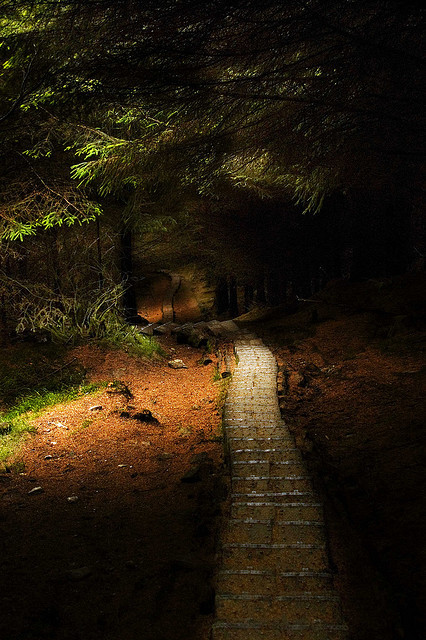 Forest Path, Wicklow, Ireland