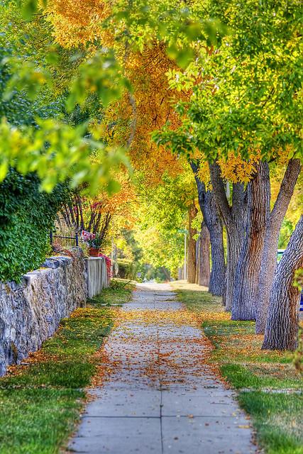 Autumn Sidewalk, Helena, Montana