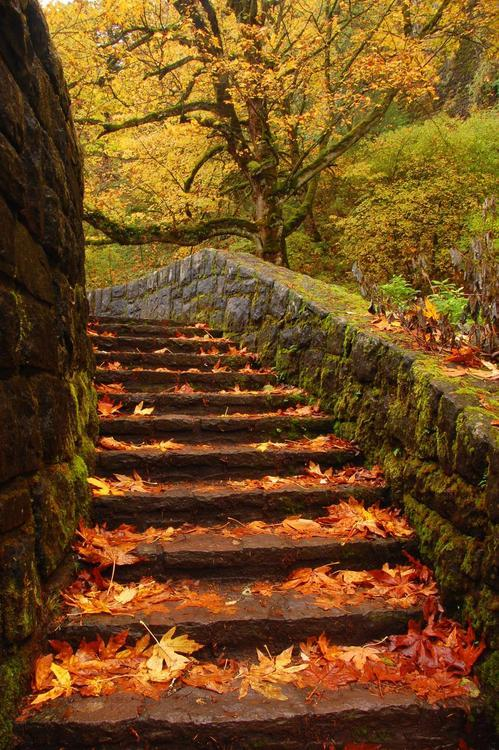 Autumn Path, Columbia River Gorge, Oregon
