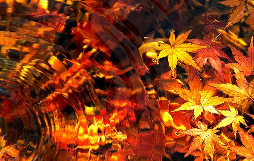 Underwater Autumn, Japan