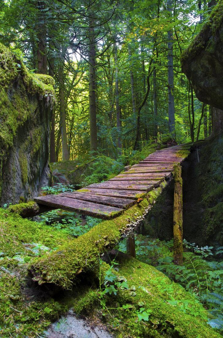 Moss Forest Bridge, British Columbia, Canada