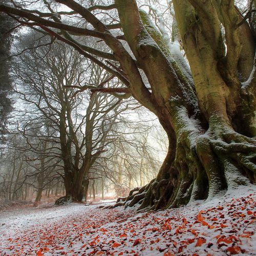 First Snowfall, Kinclaven, Scotland