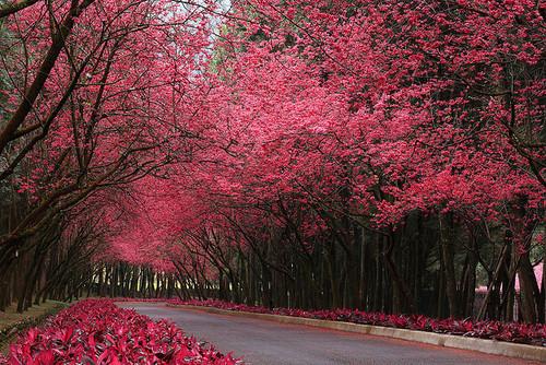 Burgundy Road, Taipei, Taiwan