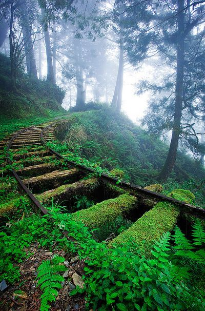 Jiancing Historic Trail in Taipingshan National Forest, Taiwan
