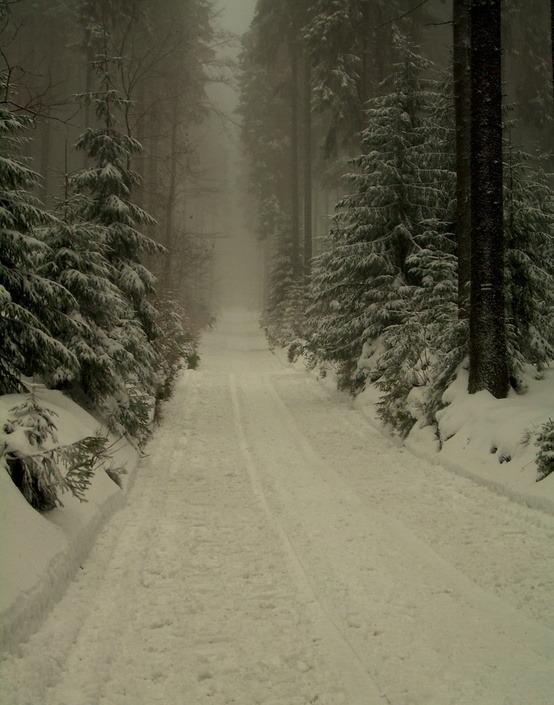 Dark Winter Forest, Poland