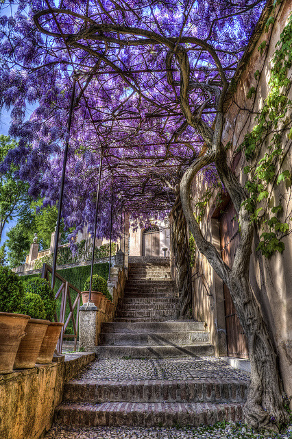 Stairway in the beautiful Generalife Gardens, Granada / Spain